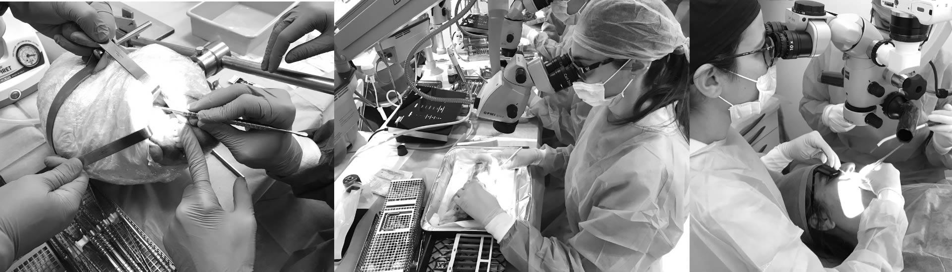 Microcirugía Apical y Manejo de Tejidos Blandos